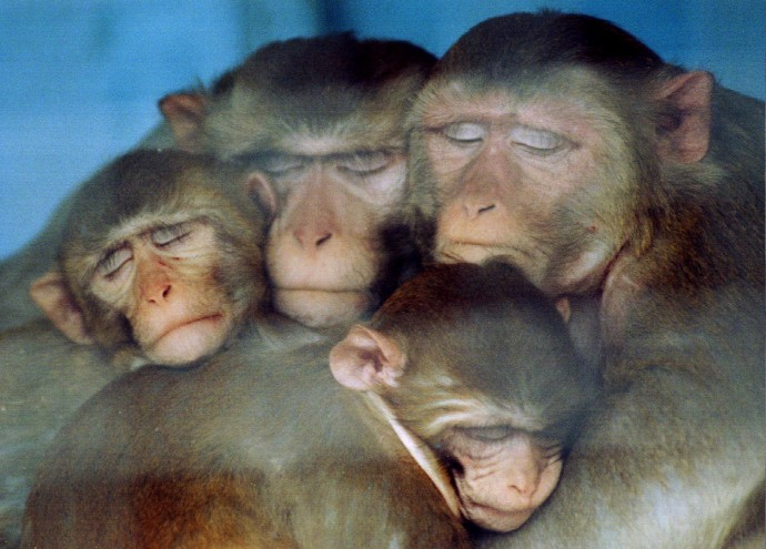 Iran To Send Monkey Into Space Video