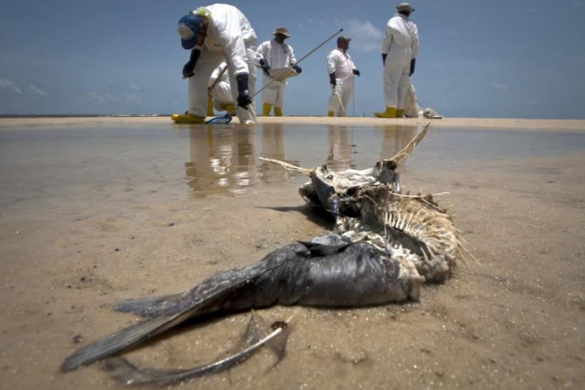 Mass extinction by 2050:  Ocean and marine life in danger (Photos)