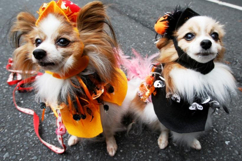 Halloween 2011 Fever: Adorable Halloween Costumes for Hot Dogs and Tail-Waggers [PHOTOS]