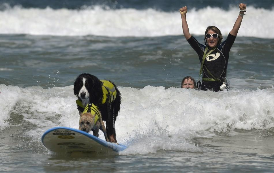 An owner celebrates as two dogs ride on one board during the Loews Surf Dog Competition in Imperial Beach