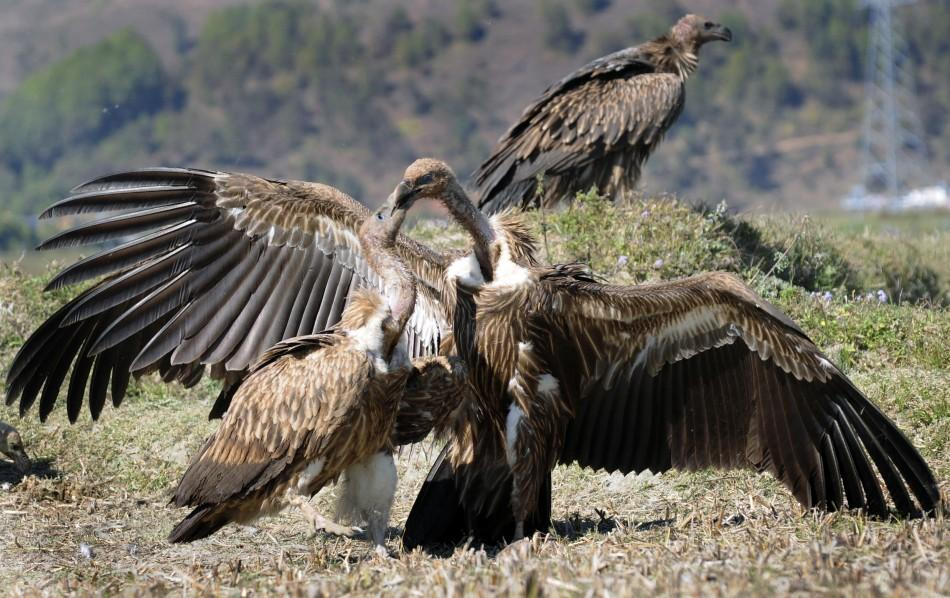German cops training vultures