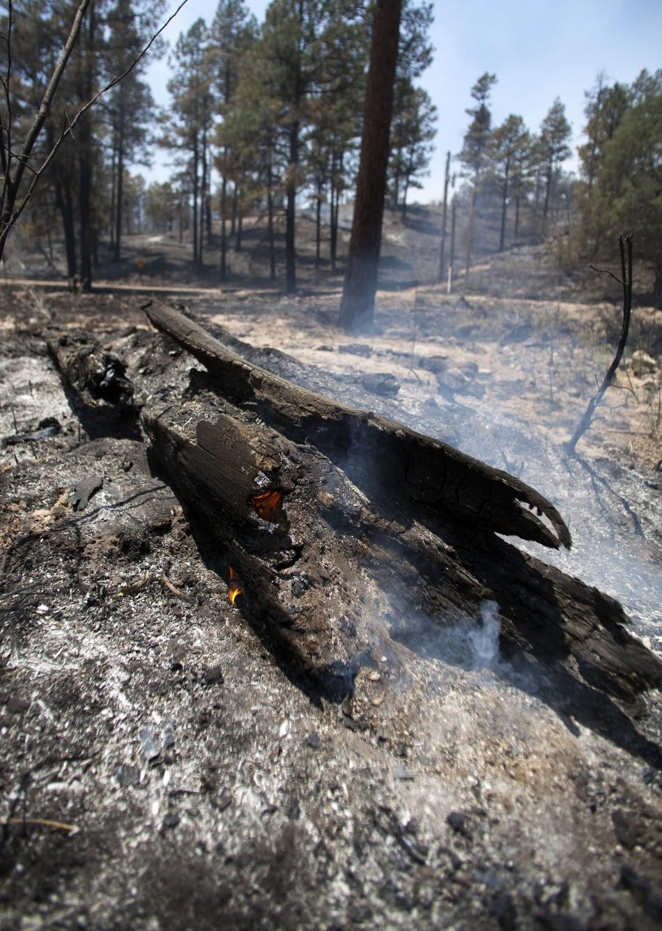 A log smolders on the eastern edge of the Wallow Wildfire outside Alpine, Arizona near the state border west of the town of Luna, New Mexico