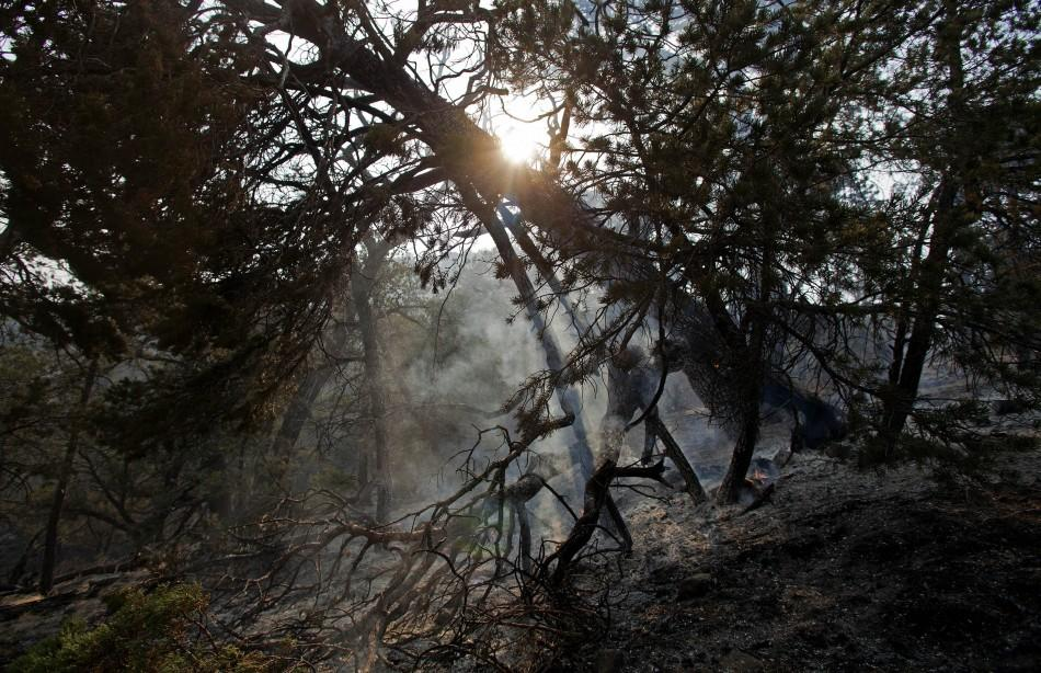 The sun sets over a smoldering tree on the eastern edge of the Wallow Wildfire outside Alpine, Arizona