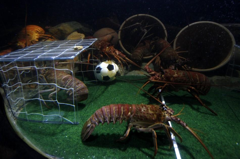 Crawfish fight for a miniature soccer ball filled with food in their tank at the Sea Life Aquarium in Berlin