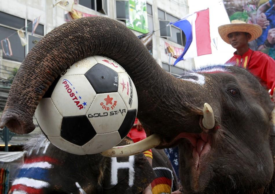 Elephants decorated with the national flags of countries participating in the 2010 FIFA World Cup play with soccer balls at Bangkok's Khao San road