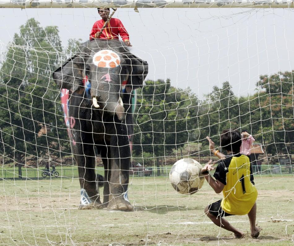 A goalkeeper tries to save the goal as an elephant scores during soccer match in Ayutthaya province,..