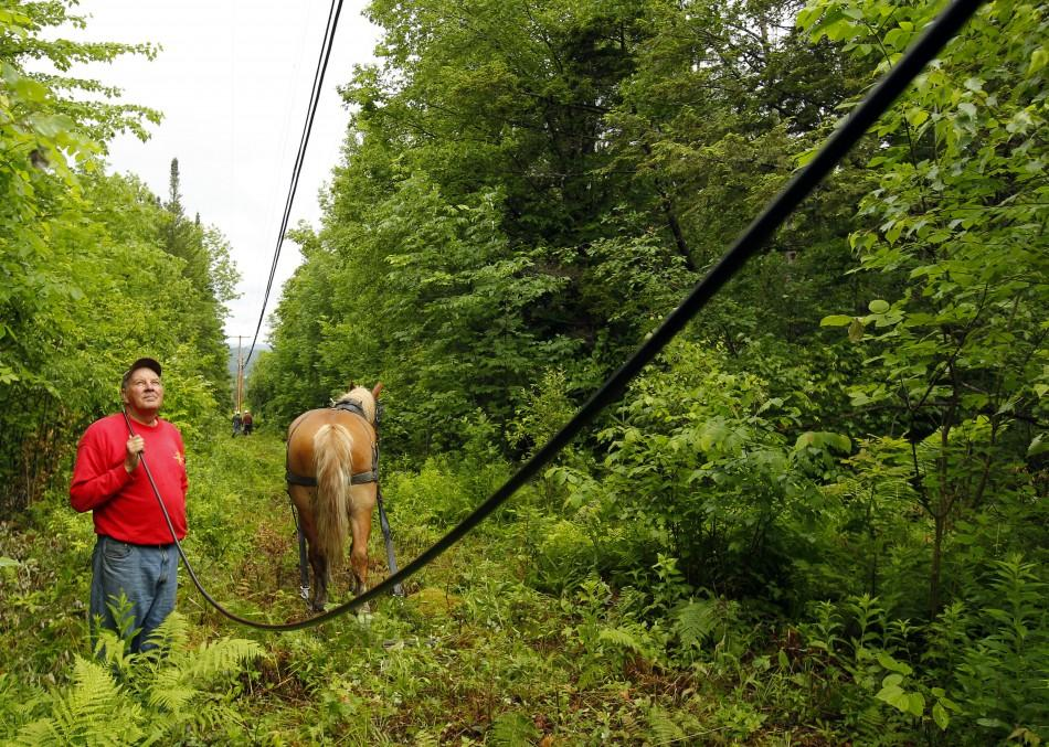 Claude Desmarais and his Belgian draft horse Fred pull fiber optic cables between utility poles in East Burke