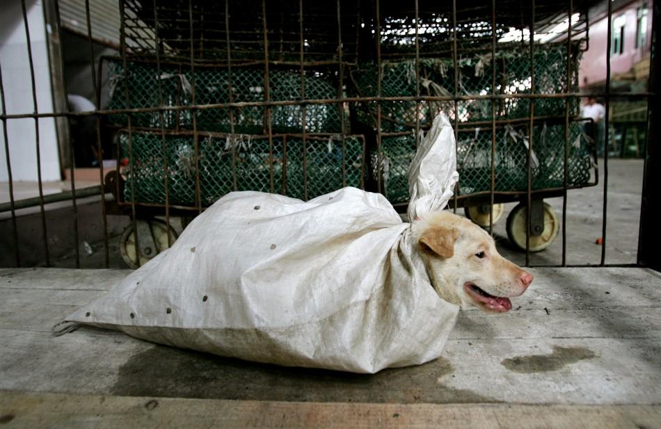 A dog is wrapped for sale at a market in the Baiyun district in China's southern city of Guangzhou September 16, 2004.