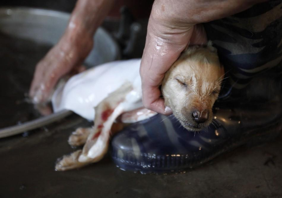 Worker removes dog's fur at a slaughter house in Dongbei county of Lianzhou