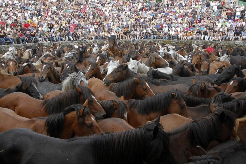 "Wild horses are seen gathered during the ""Rapa Das Bestas"" event in the village of Sabucedo"