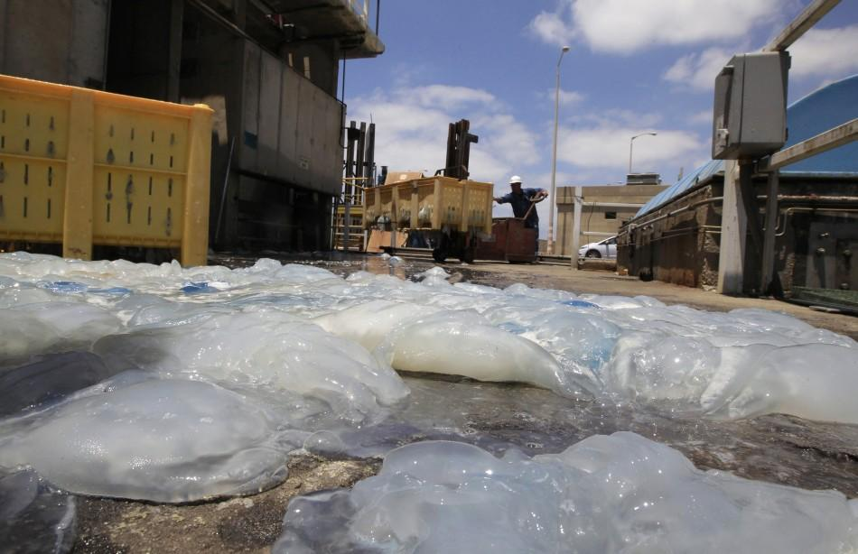 Jellyfish blocking water supply at Orot Rabin nuclear power plant in Israel