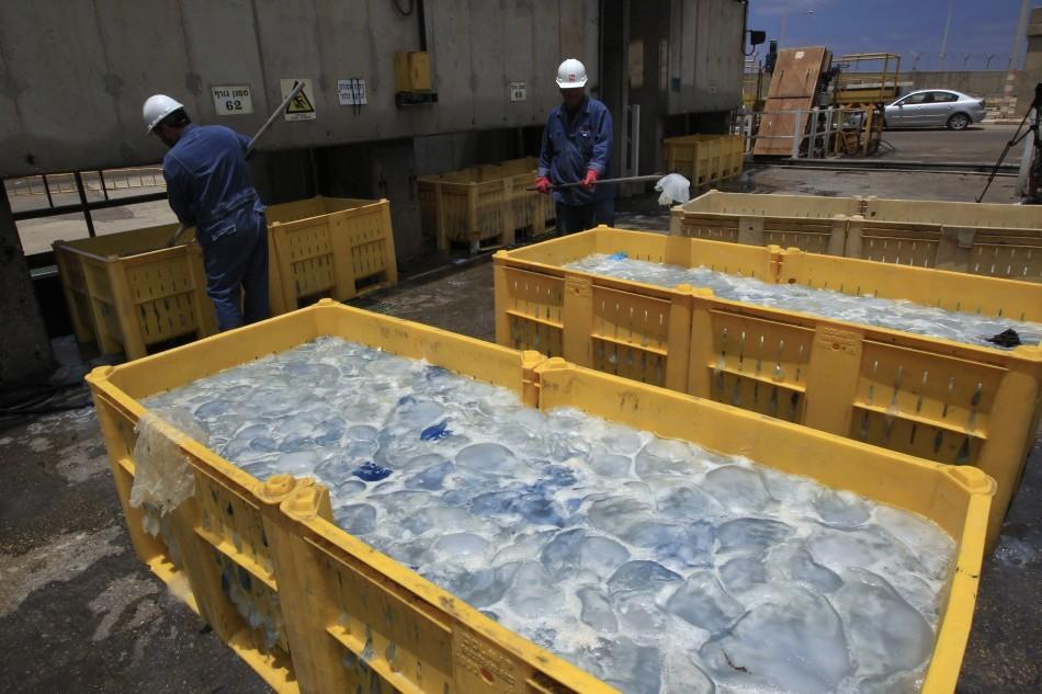 Jellyfish Invade Four Nuclear Reactors in Japan, Israel, Scotland