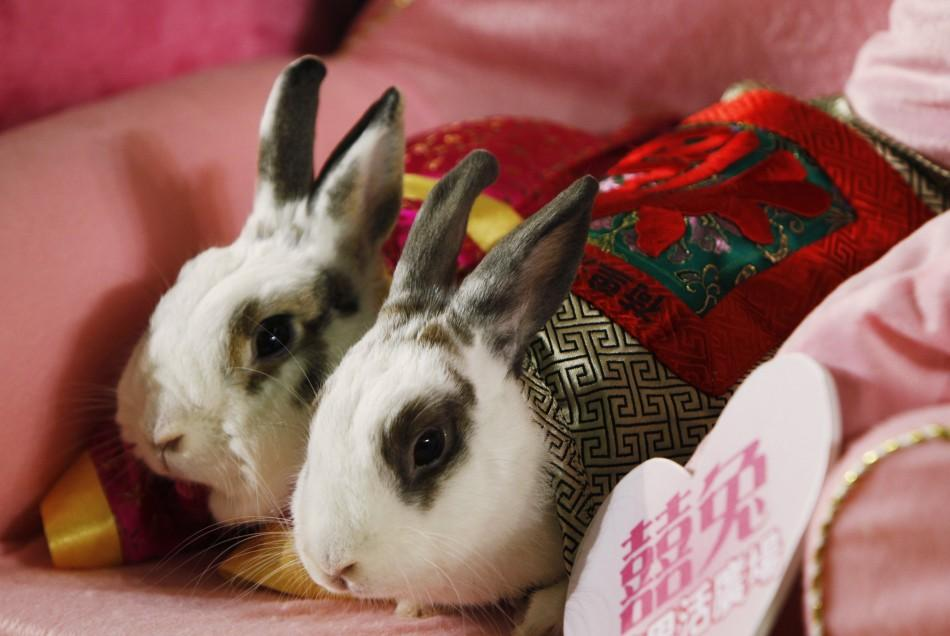Sterilized pet rabbits dressed in traditional Chinese costumes are pictured during a wedding ceremony in Hong Kong