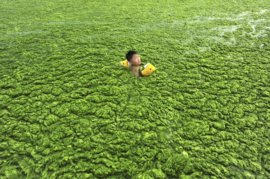 Green Algae Bloom Clogs China's East Coastline