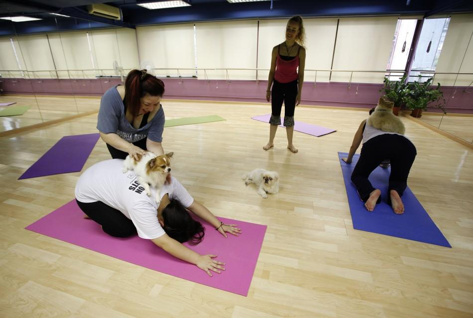 Oddly Trend: Doing Yoga With Your Dog is Called 'Doga'