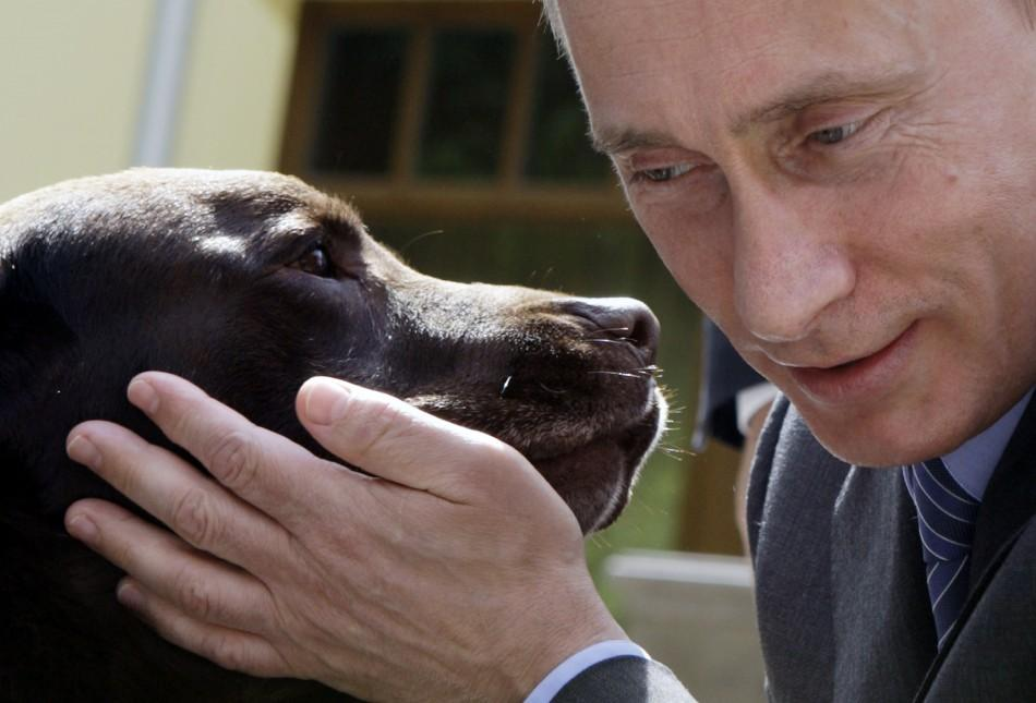 Russia's Prime Minister Vladimir Putin pets Labrador dog Tonik during his meeting with Russian rescue workers in his Novo-Ogaryovo residence outside Moscow
