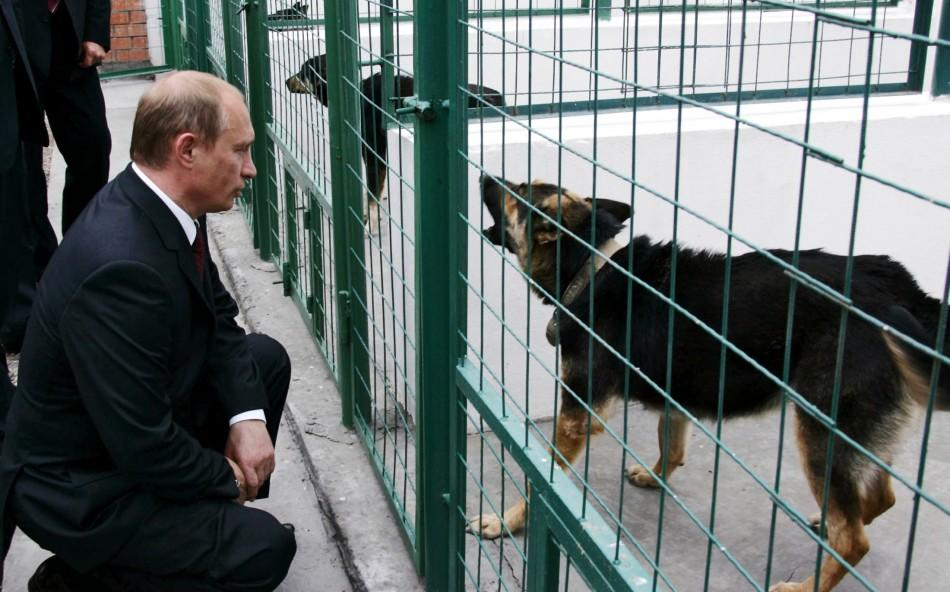 Russian President Vladimir Putin looks at a dog kept in a kennel during his visit to Dzhepel ...