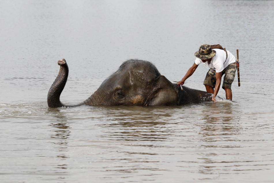 A mahout stands on an elephant in a flooded area of Thailand's Ayutthaya province, October 13, 2011.