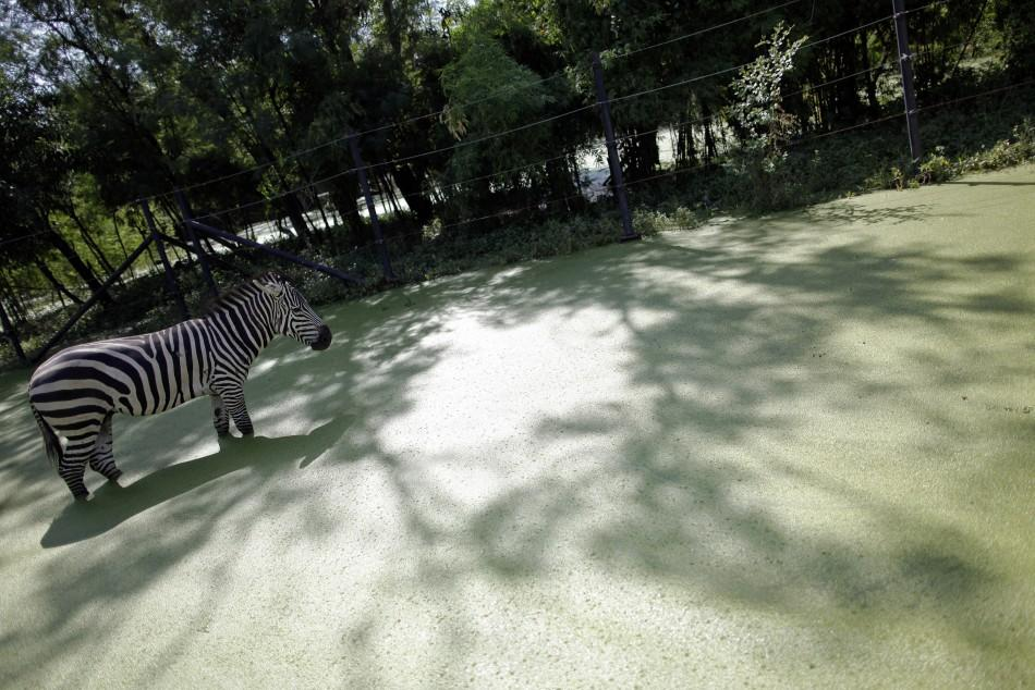 Thailand's Safari World Submerged