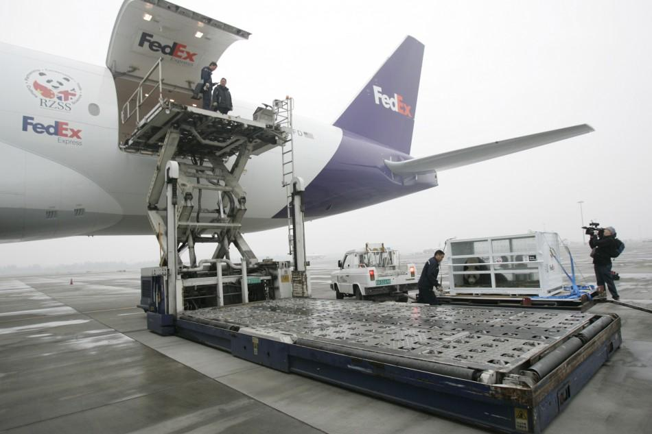 Staffs transport giant panda Yang Guang in a FedEx container onto the plane at Chengdu Shuangliu International Airport