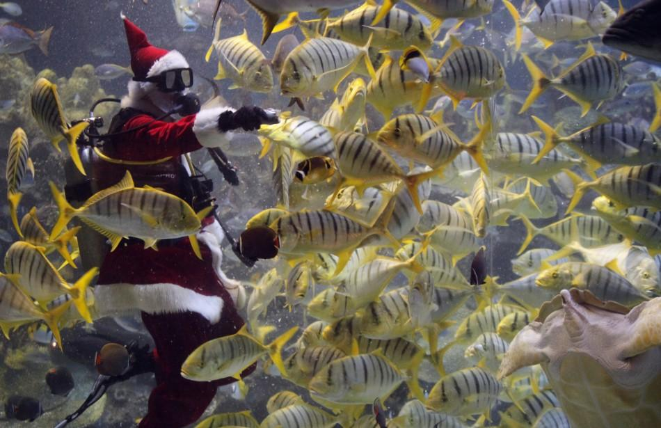 "Malaysia's Aquaria KLCC ""Scuba Santa"" feeds a school of fish at the underwater park ahead of Christmas in Kuala Lumpur December 9, 2011."