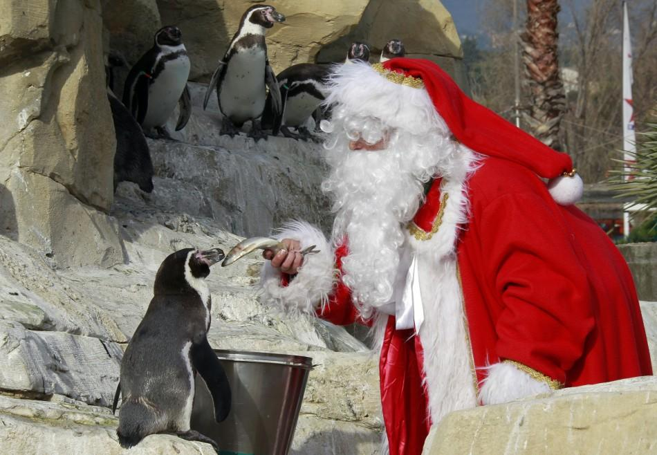 A woman dressed as a Santa Claus feeds an humboldt penguin at Marineland aquatic park in Antibes, southeastern France, December 13, 2011.