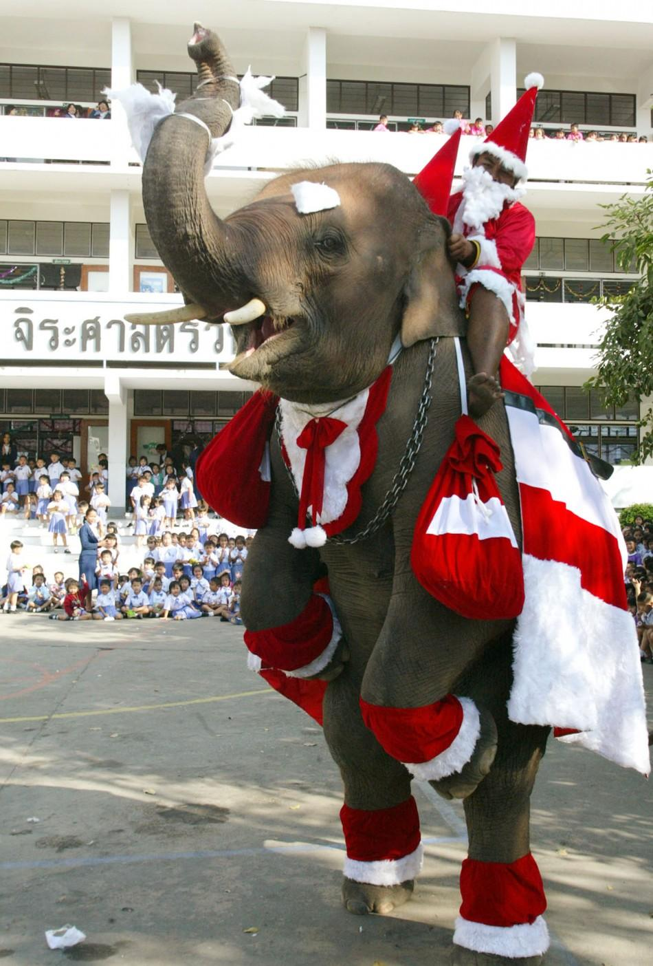 Baby elephant wearing a Santa Claus costume.