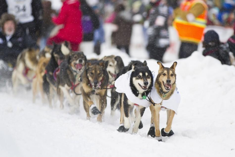 Dallas Seavey's team, from Willow, Alaska, races down the 4th Avenue during the ceremonial start of the 40th Iditarod Trail Sled Dog Race in downtown Anchorage