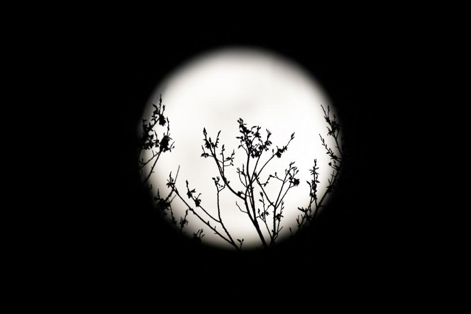 Pink Moon: When And Where To Watch April Full Moon