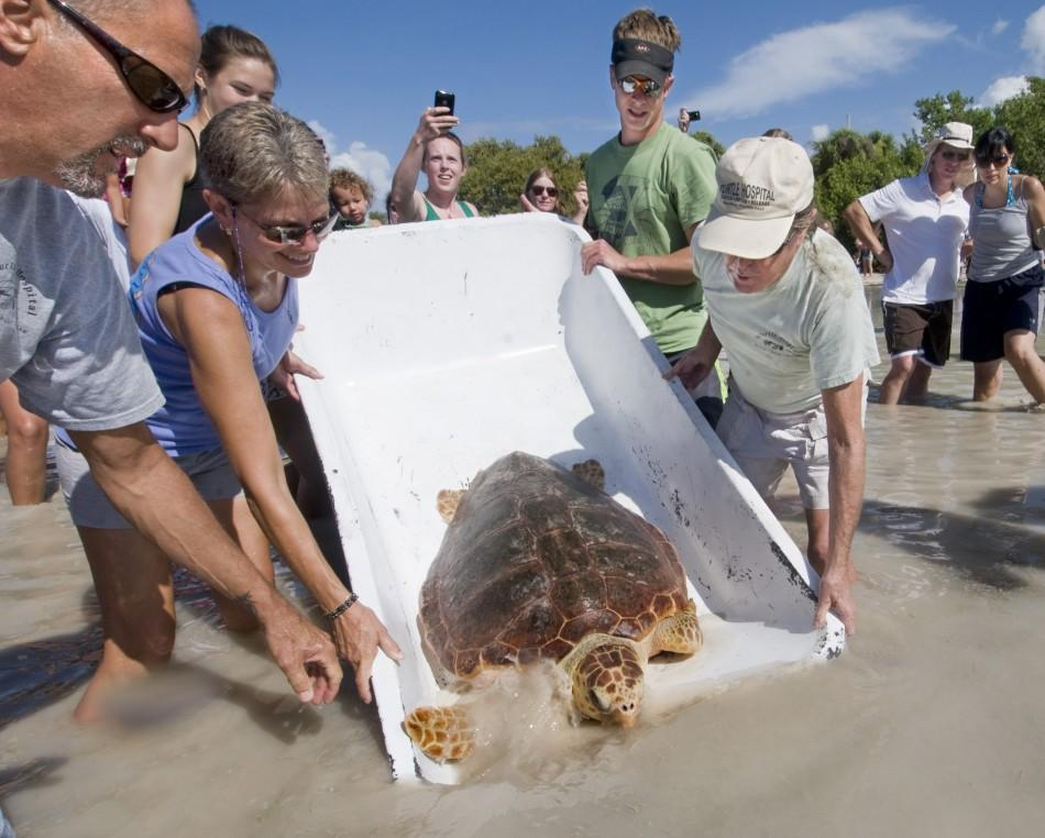 Staff members of the Florida Keys-based Turtle Hospital