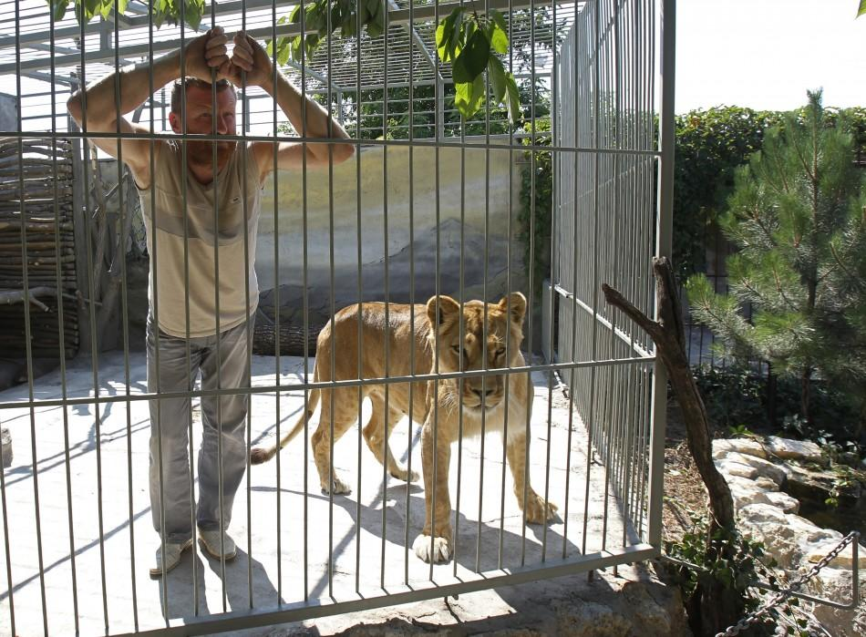 Zoo owner Pylyshenko looks on inside a cage with female African lion Katya at a private zoo situated in his yard in Vasilyevka