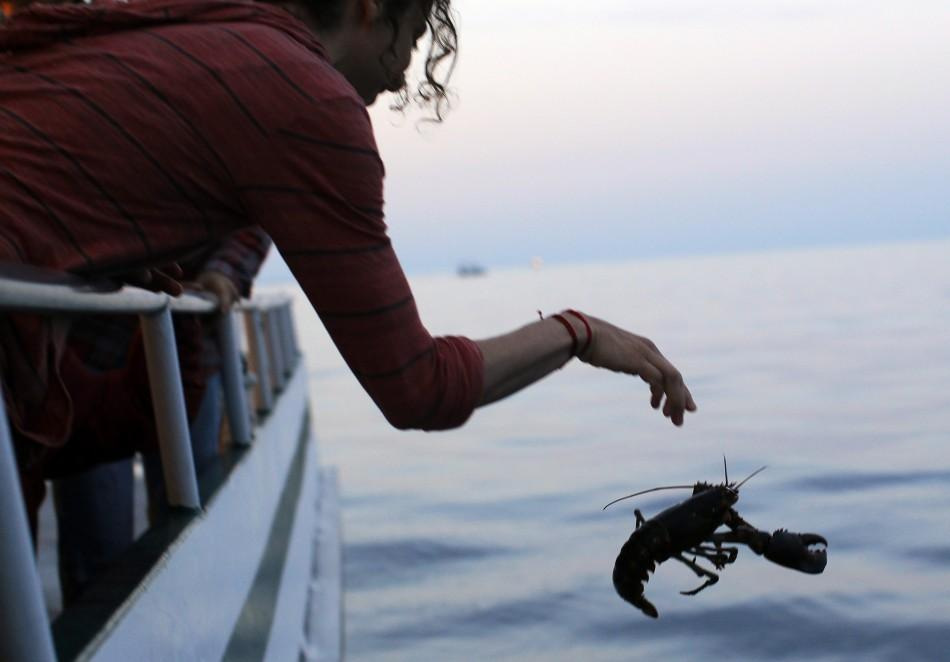 "A Buddhist releases a lobster back into the ocean during ""Chokhor Duchen"" from a boat in the waters off Gloucester"