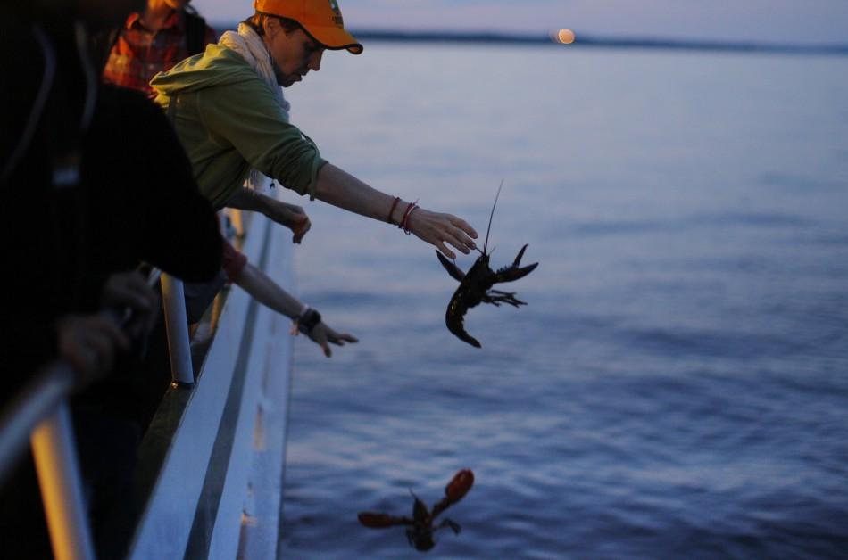 "Buddhists release lobsters back into the ocean during ""Chokhor Duchen"" from a boat in the waters off Gloucester"