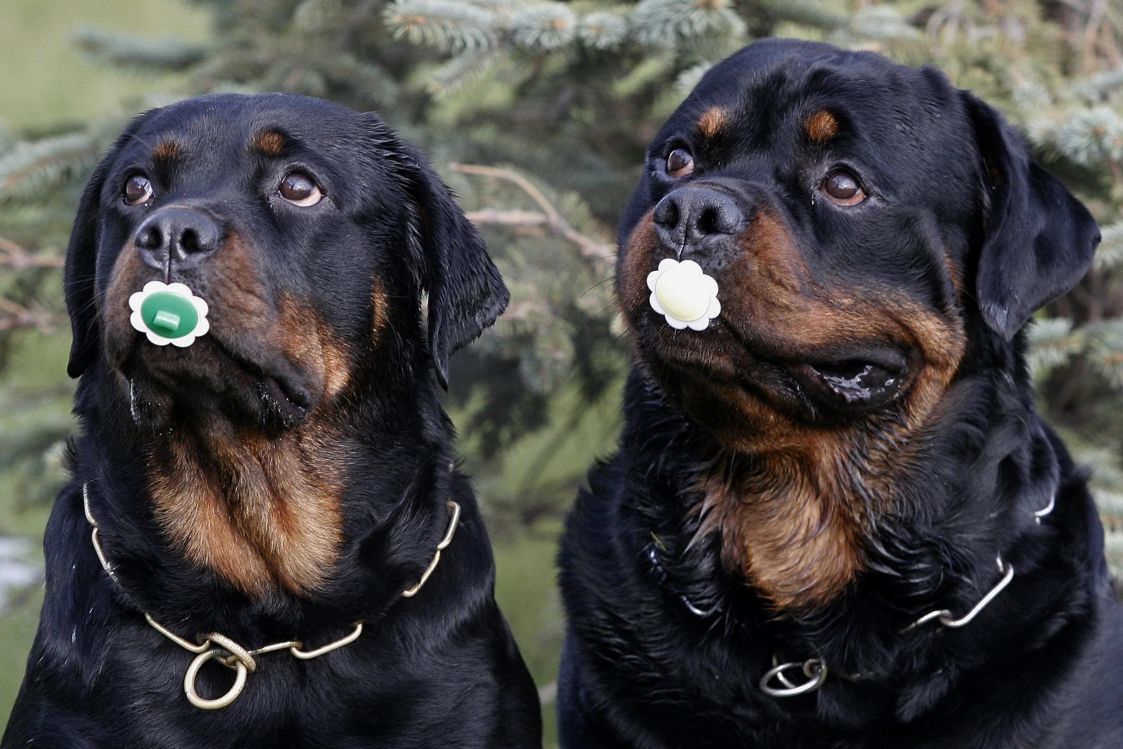 National Dog Day Adorable Photos Of The Top 10 Dog Breeds