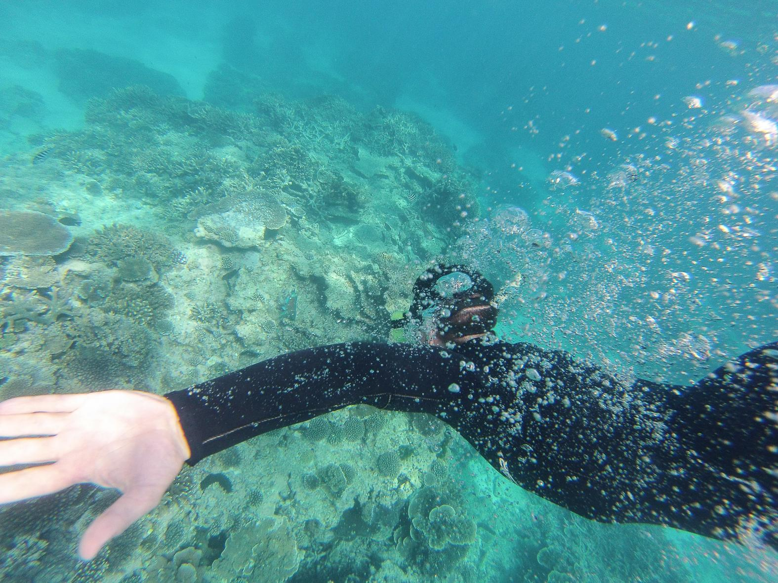 snorkeling great barrier reef