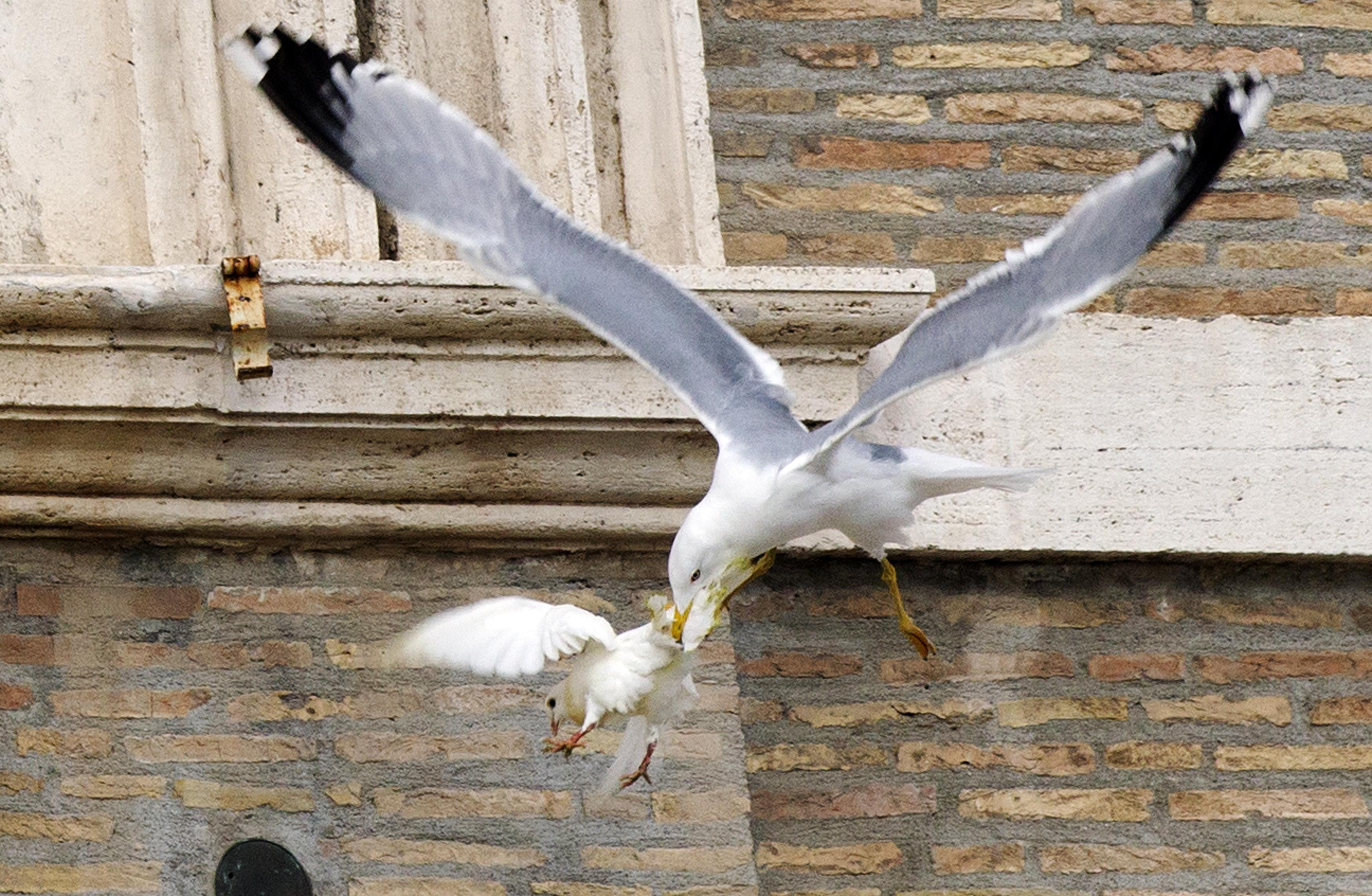 Doves Of Peace Attacked By Angry Birds