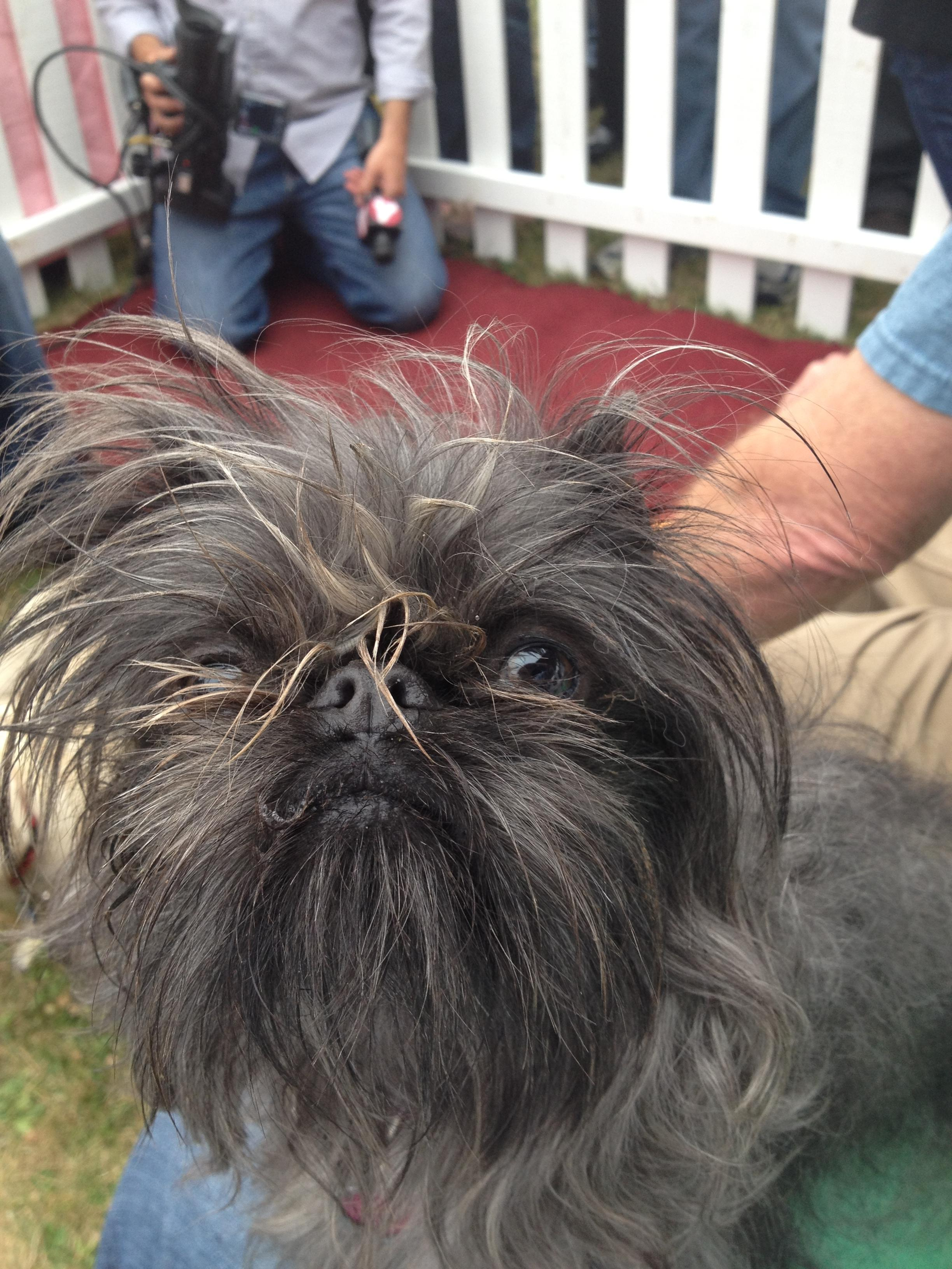 Monkey - World's Ugliest Dog Contest 2014 Contestant