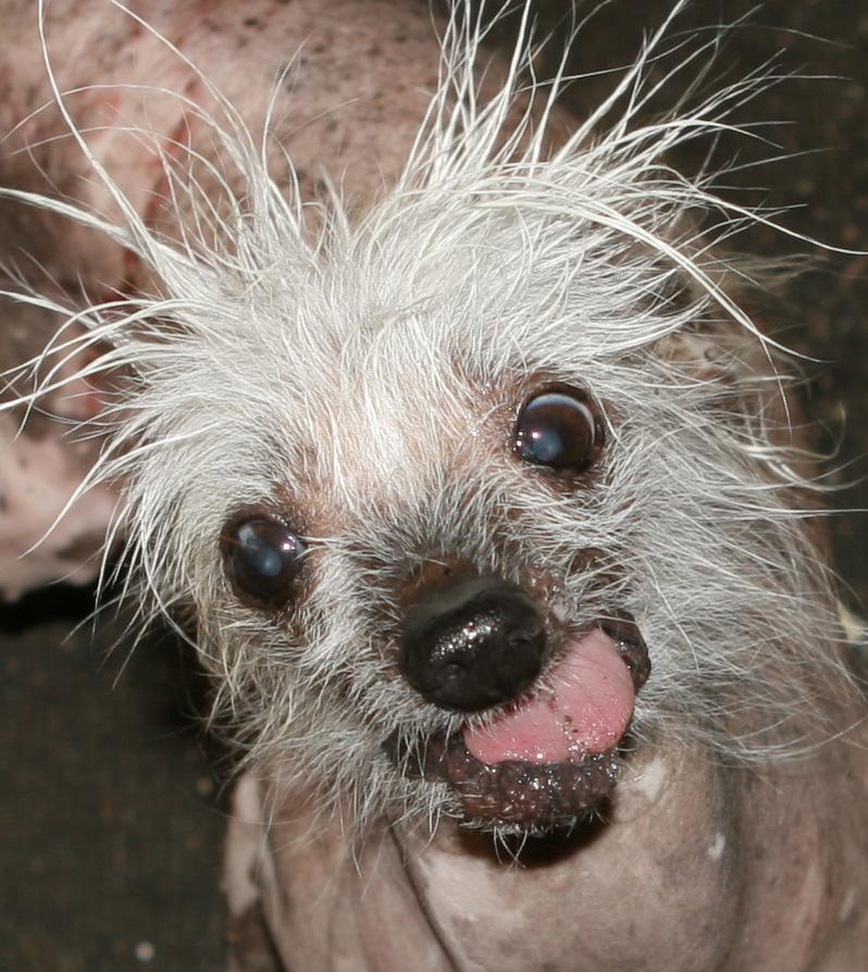 Rascal - World's Ugliest Dog Contest 2014 Contestant