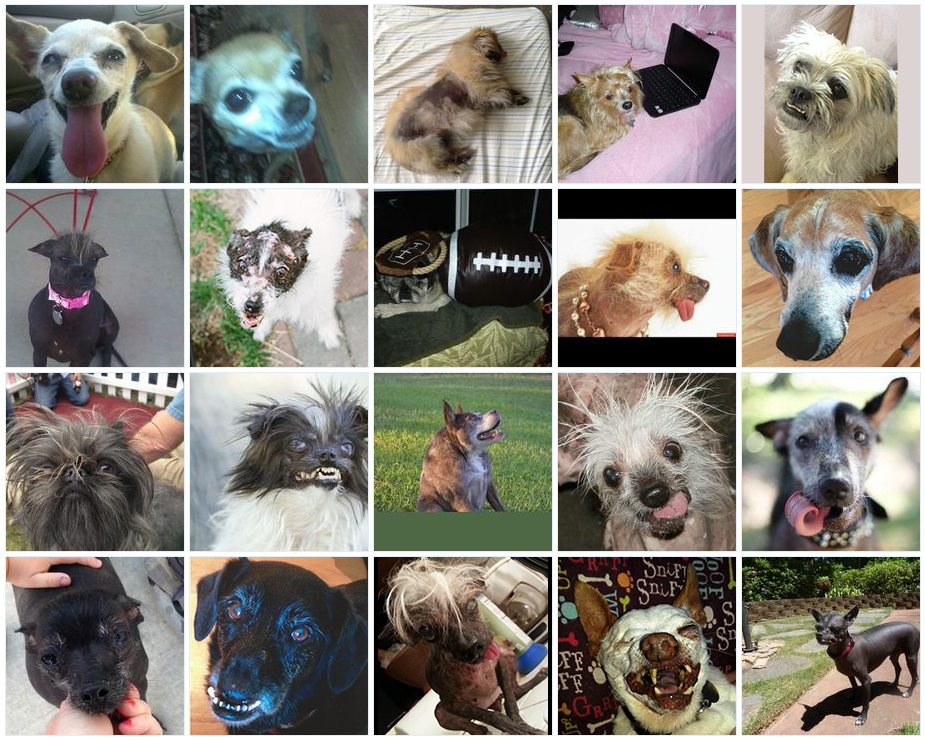World's Ugliest Dog Contest 2014: Meet The 20 Canine Contestants [PHOTOS]