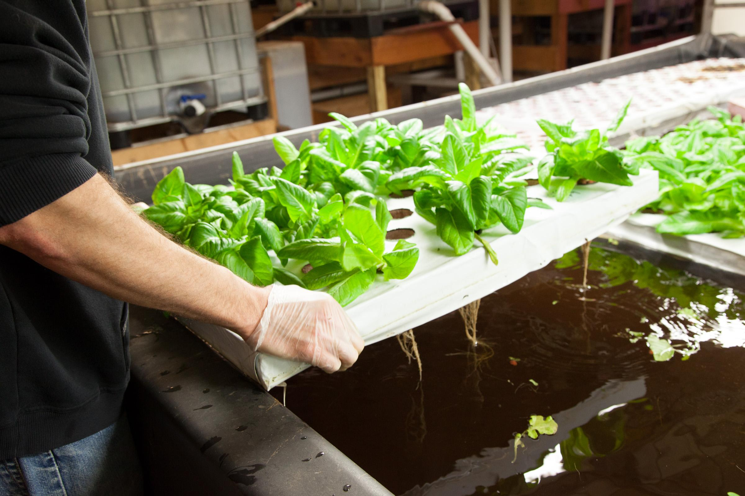 Indoor Farming Future Takes Root In Abandoned Buildings