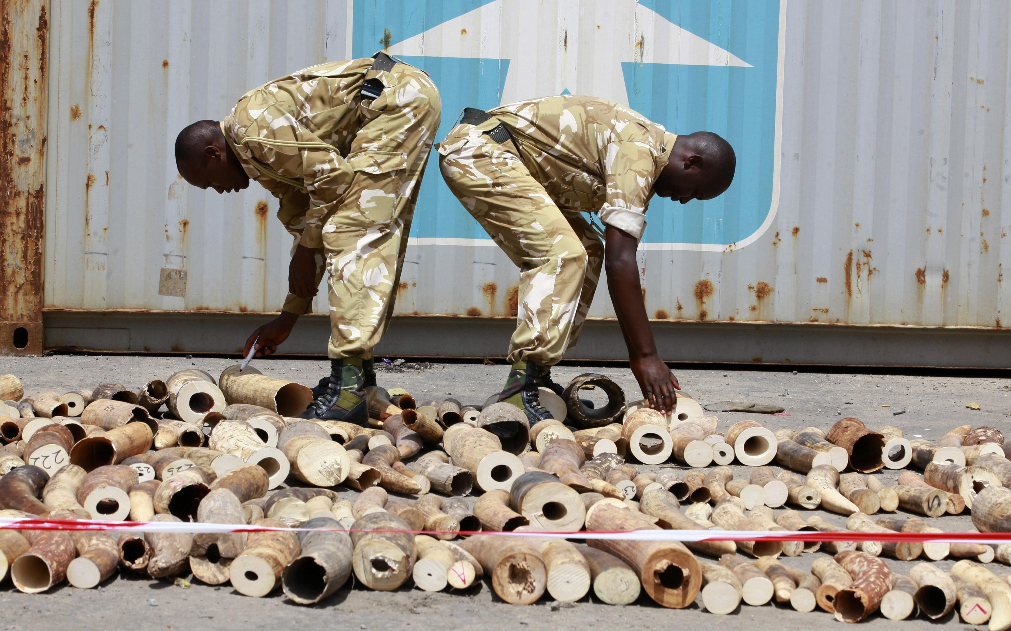 Seized Ivory Poachers