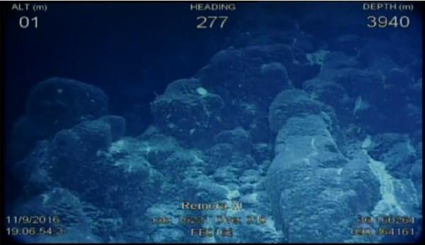 frame-grab-from-rov-camera_dive10
