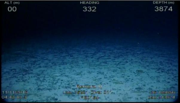 rov-video-frame-grab_dive11