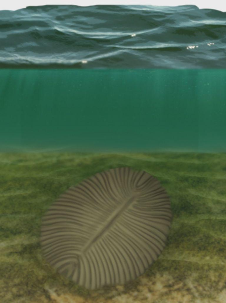 Fossils Of Ancient Flat Sea Animals Tell Us About Evolution, Human Ancestry In Ocean