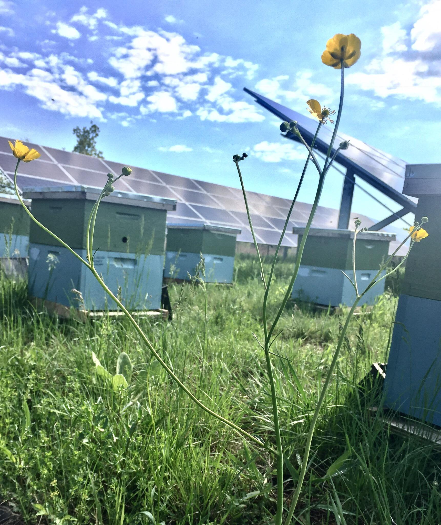 flower hives and solar