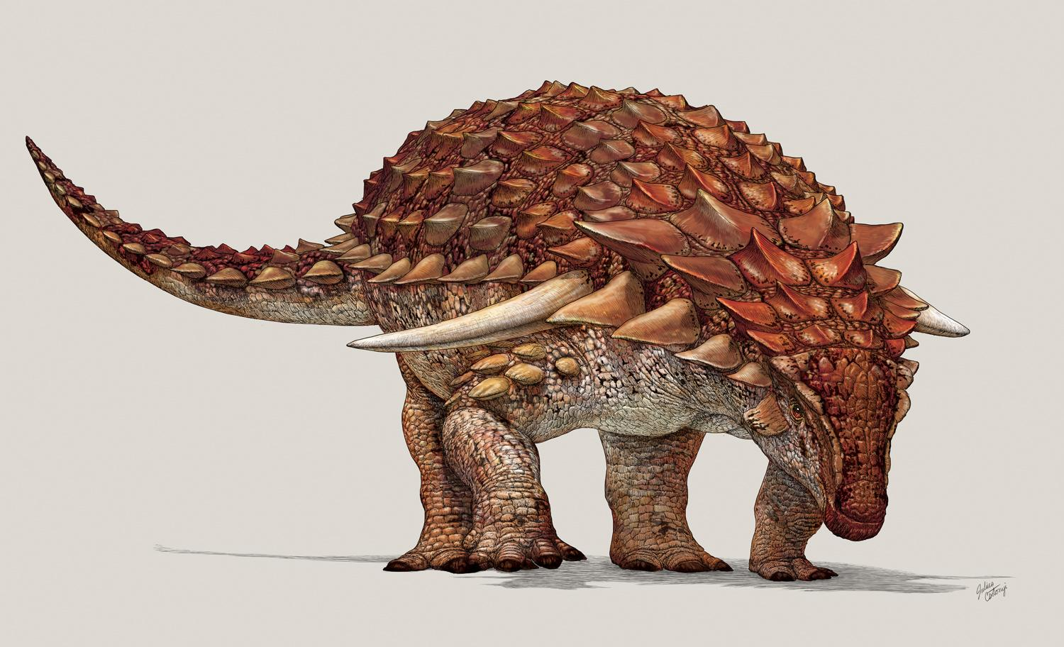 Massive Dinosaur With Armor Had Camouflage, Scientists Say