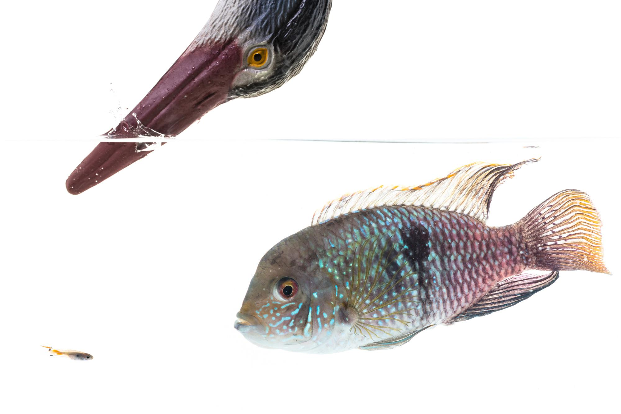 Scientists find fish actually have complex personalities