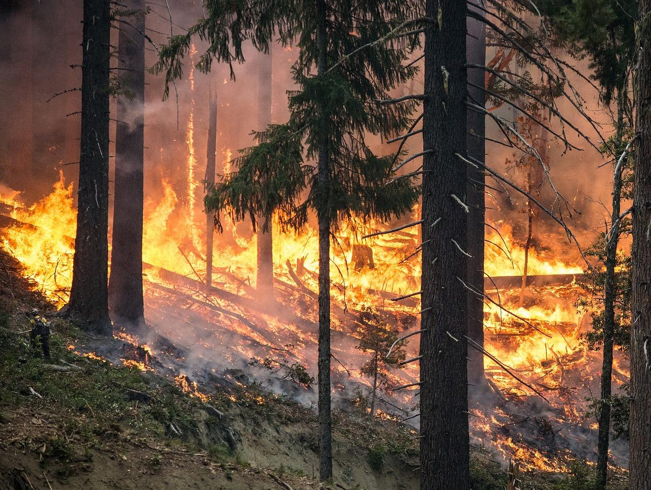 forest-fire-2268725_1280