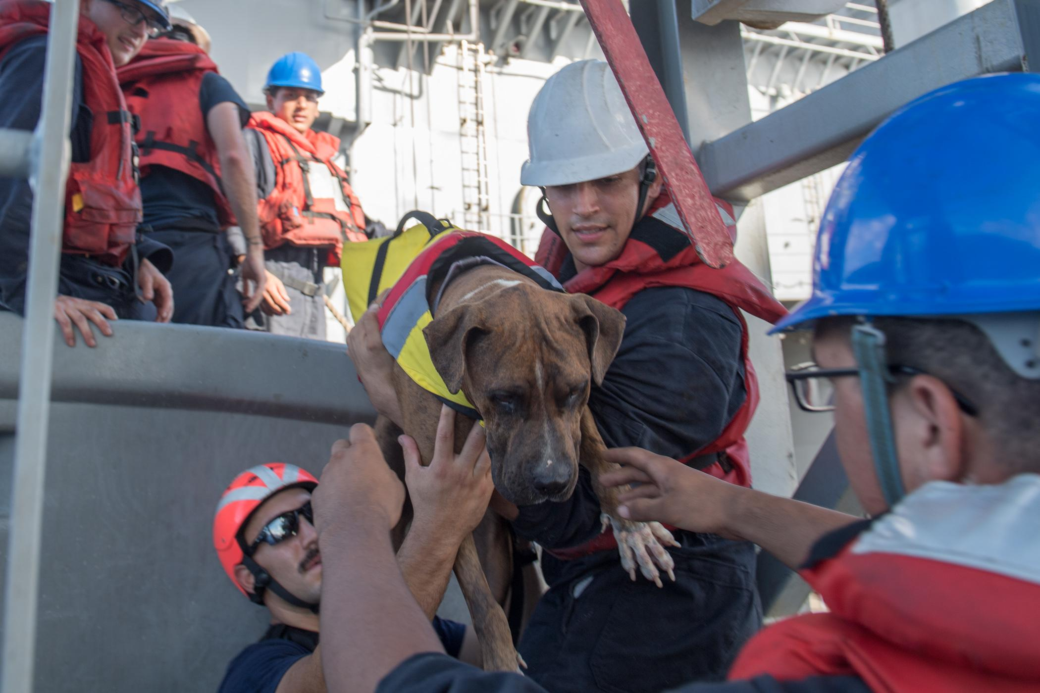 Navy rescues women, dogs lost at sea for months
