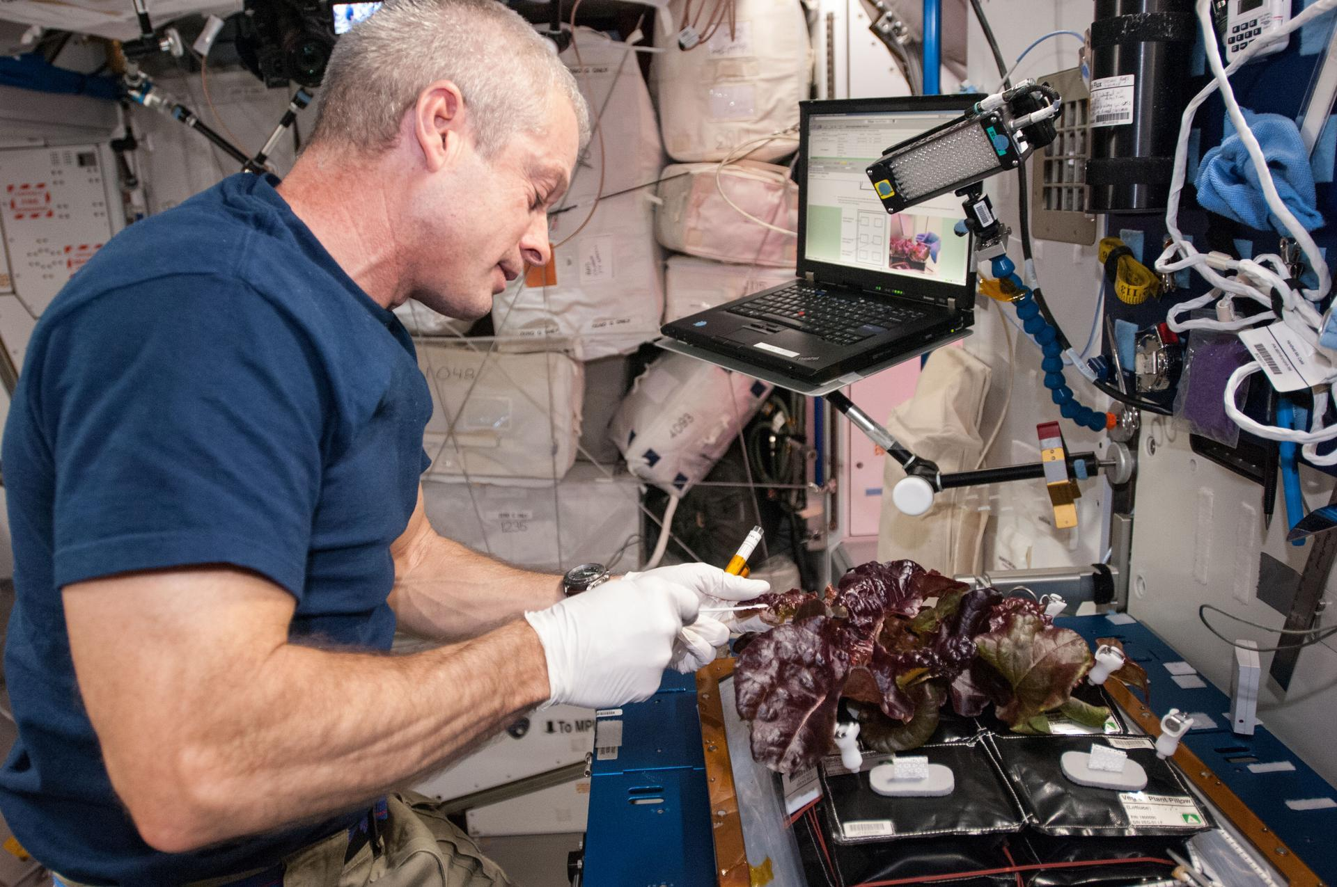 iss lettuce working space station